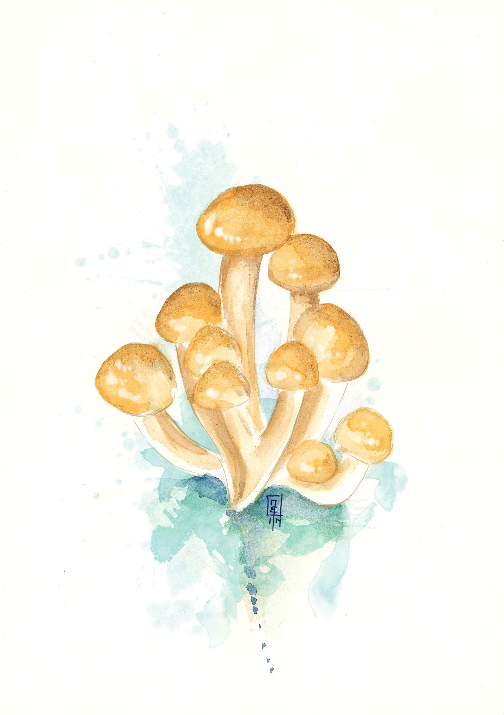Bandnudeln mit Pilz-Sahne-Soße