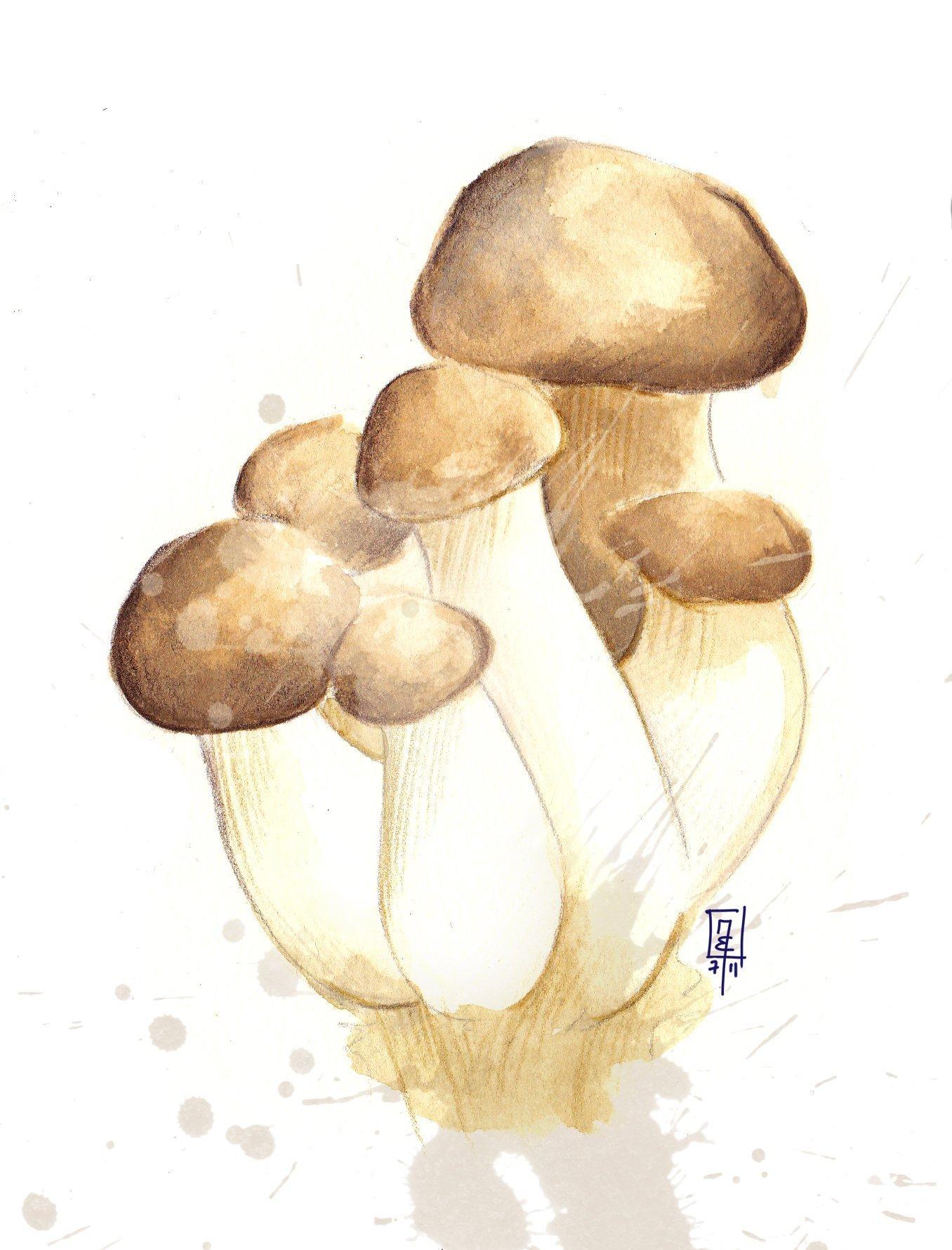 Pilz-Risotto aus Kräuterseitlinge